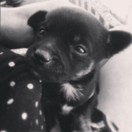 собачка собака черный_щенок щенок Dog Puppy Pup животные )