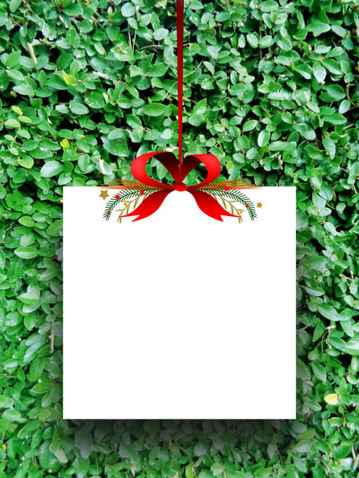 One empty square paper sheet frame with Xmas ribbon decoration on green leaves background 1 Background Blank Christmas Empty Frame Green Leaves Hanged Holidays Image One Paper Photo Picture Poster Present Product Photography Product Placement Red Ribbon Square Tag Template Typography White Xmas