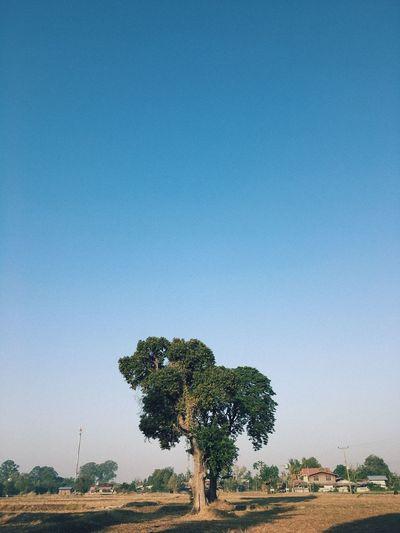 A tree 🌳 Tree
