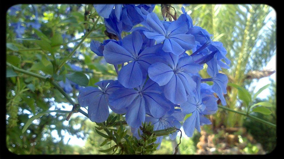 No Filter Needed Natural Beauty Flower Porn Jasmine