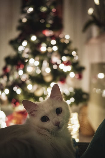 High angle view of cat on illuminated christmas tree at home