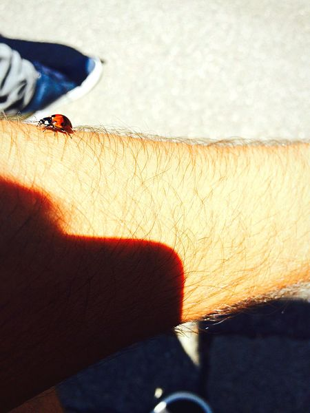 Photo Suisse  Photography Picture Love Sweet Ladybug Sun Soleil ❤