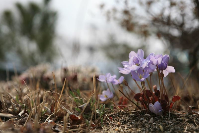 The Golden thread Flower Spring Small Flower Micro Photography Arjungtaeng Korean Flower Nature Plant Beauty In Nature