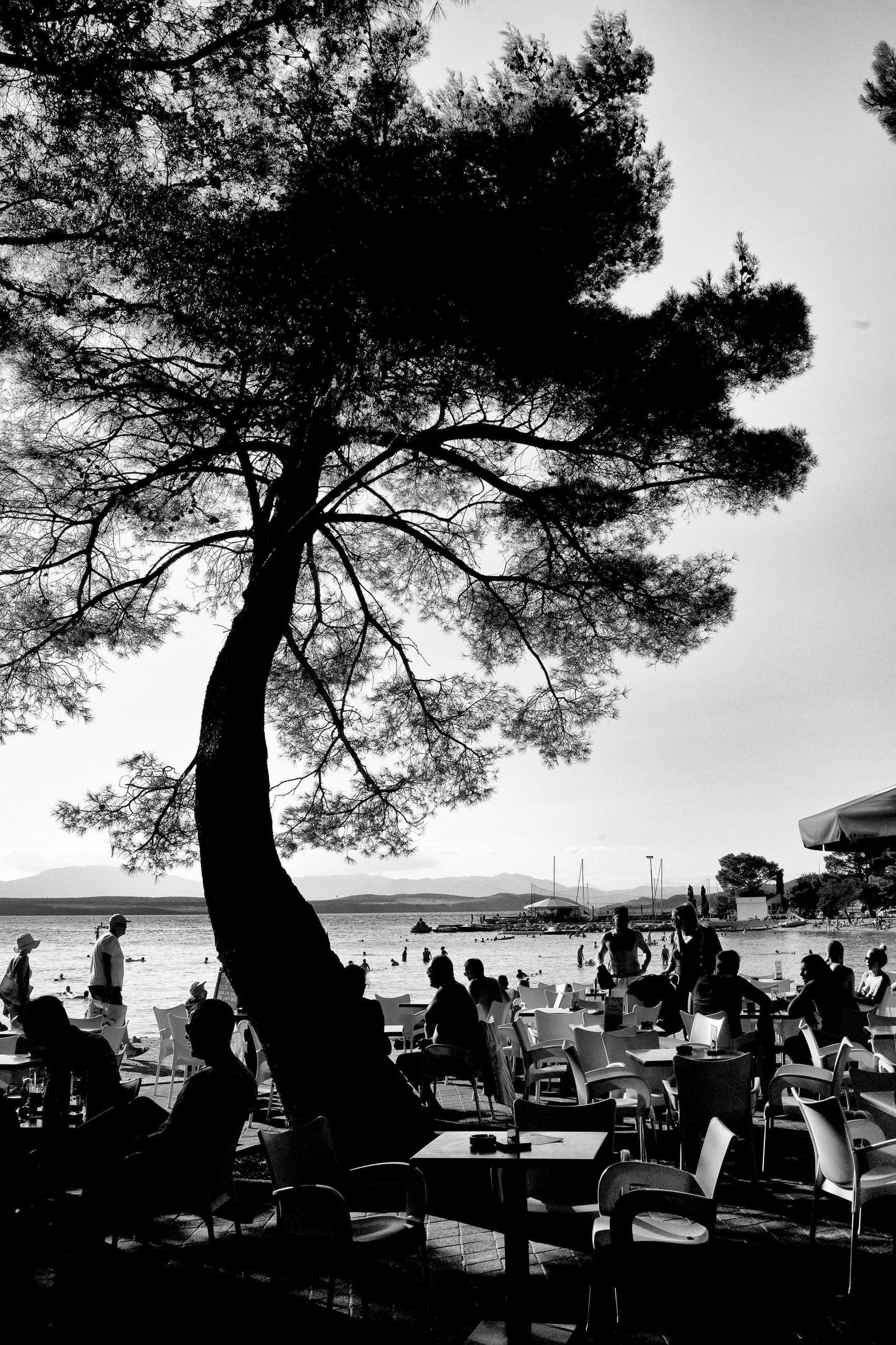 tree, black and white, group of people, monochrome photography, crowd, monochrome, plant, nature, sky, water, large group of people, men, leisure activity, women, sitting, lifestyles, adult, sea, seat, relaxation, silhouette, beach, outdoors, enjoyment, chair, table, black, day, land, person, togetherness