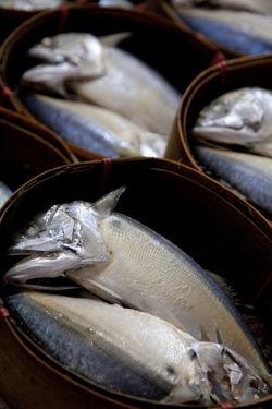 close up of mackerel fish in market Market Close-up Day Fish Fish Market Food Food And Drink Freshness Healthy Eating Indoors  Mackerel Mackerel Fish No People Raw Food Seafood