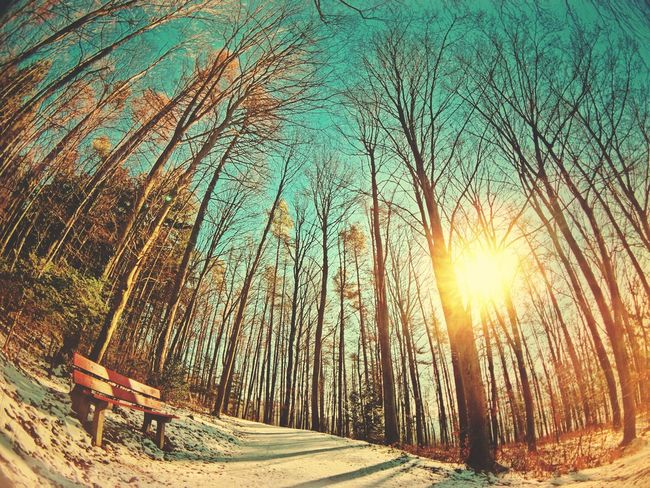 Nature Sunlight Sun Sunbeam Outdoors Beauty In Nature Winter Tree Winterthur Trees Forest Forest Photography Sunlight Happiness Happy Sports Photography Bright Colors Positive Creation Cold Temperature Sky Day Snow Scenics People