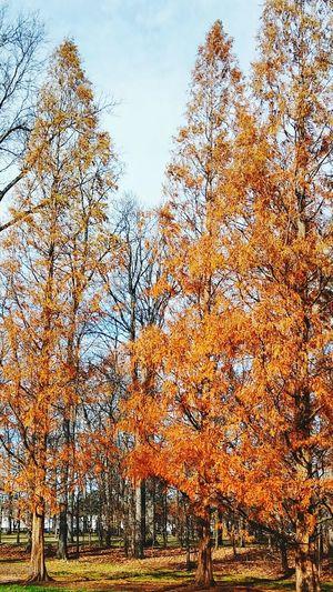 Under Blue Skies Autumn
