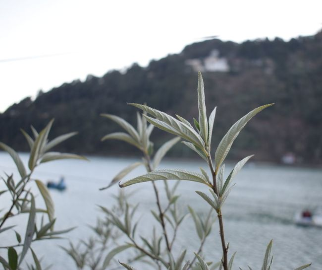 Beauty TheGreatHimalyas Close-up Nature Scenics Mountain Nature Beauty In Nature Nikonindiaofficial Nikonphotography Nikon Nikonindia NIKON D5300 Leaf 🍂 True Colors Story