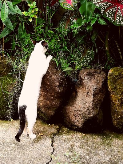 Shadow Day Outdoors Nature Cat Animal Sidewalk Photograhy Sidewalk Discoveries Sidewalk Real Life EyeemPhilippines EyeEmNewHere EyeEm Selects EyeEmAnimalLover