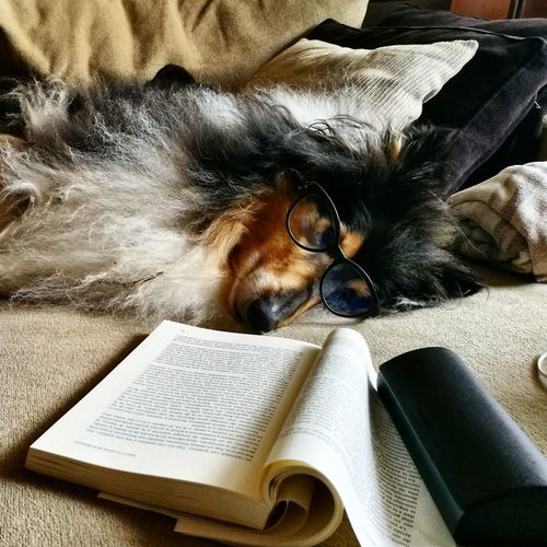 Reading Book Learning Studying Eyeglasses  Writing Animal Themes Reading Glasses Education Indoors  Paper Mammal Portrait Day One Person Young Adult Close-up People Pet Portraits