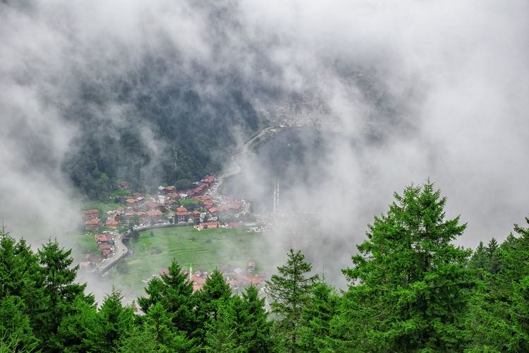 Panoramic view of trees in forest against sky. landscape in uzungol, turkey