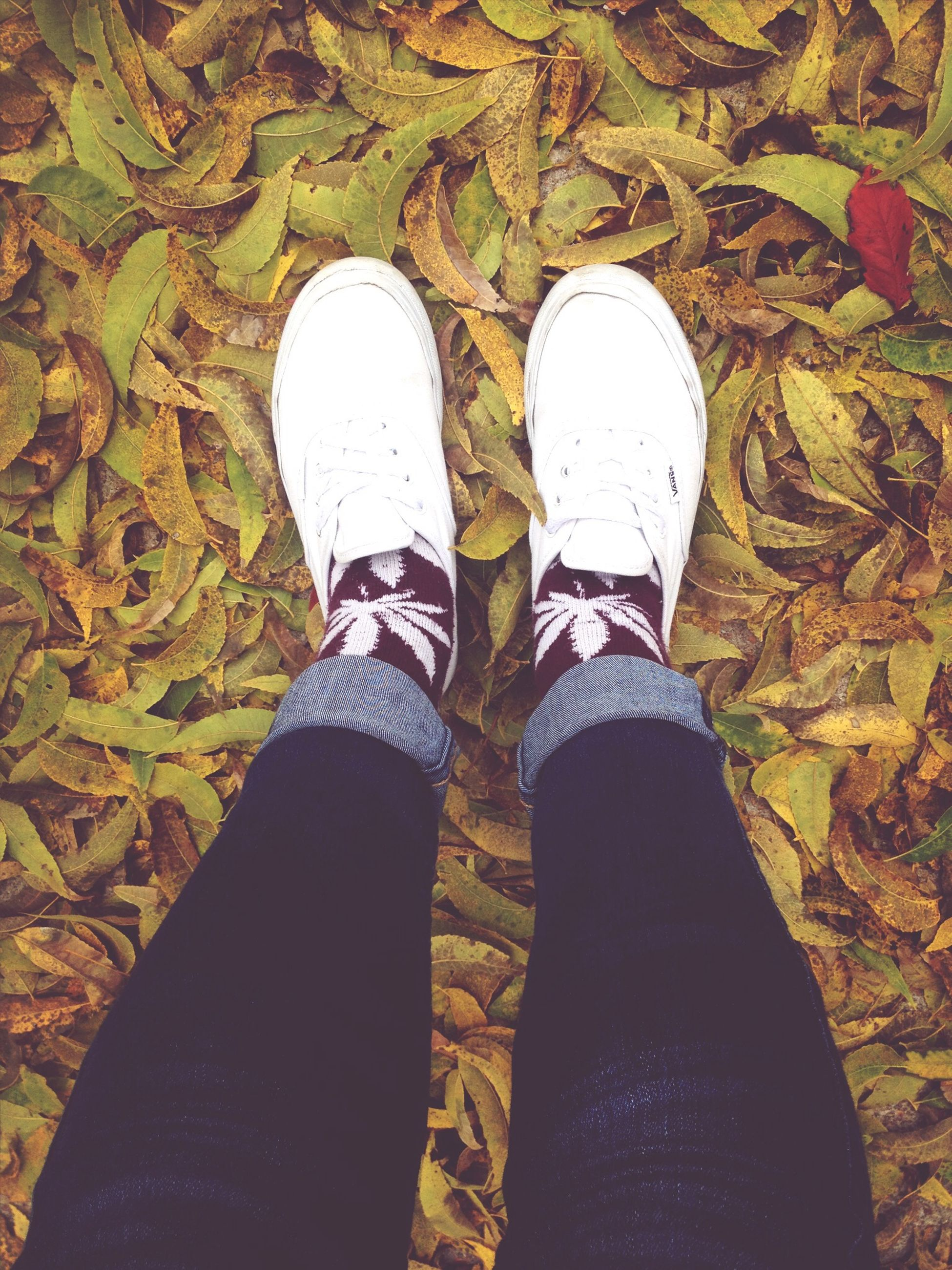 low section, person, shoe, personal perspective, jeans, standing, footwear, human foot, lifestyles, high angle view, directly above, leisure activity, unrecognizable person, men, canvas shoe, leaf, part of