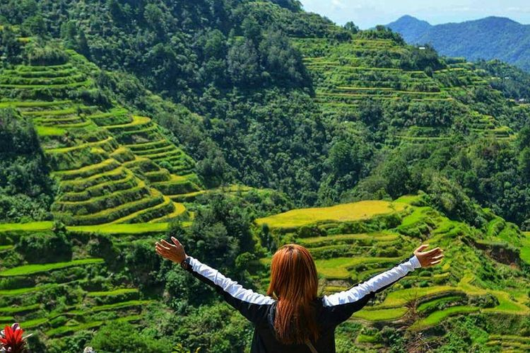 rice terraces World Heritage Green Color Mointain View Terraced Field Indigenous Culture Ancient Beauty Philippines Mountain View Mountains And Sky Rice Fields  Rice Paddy