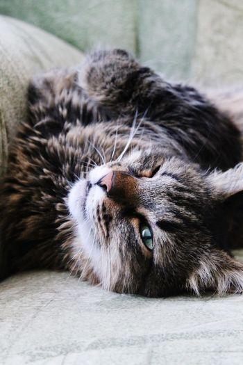Cat Cunning Harmful Cats 🐱 Cat Eyes