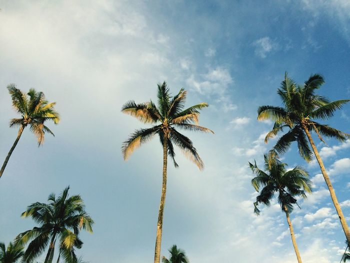 Coconut Tree Blue Blue Sky Cloud - Sky Nature The Great Outdoors - 2017 EyeEm Awards Live For The Story Sommergefühle