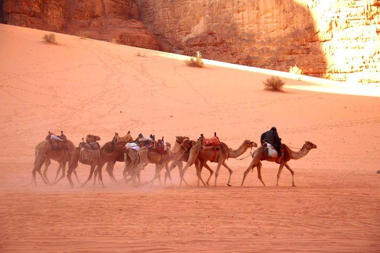People riding horses in desert