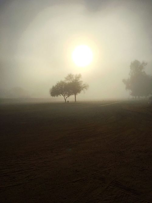 The Sun is trying to Burn Thru the Fog Beautifully moment✨ Me Alone On A Walk Peaceful View Exploring Fun Misty Morning Fog IPhone Photography Foggy Landscape Tree Sky Plant Tranquility Sun Scenics - Nature Tranquil Scene Beauty In Nature Fog Landscape Nature Silhouette No People Field Outdoors