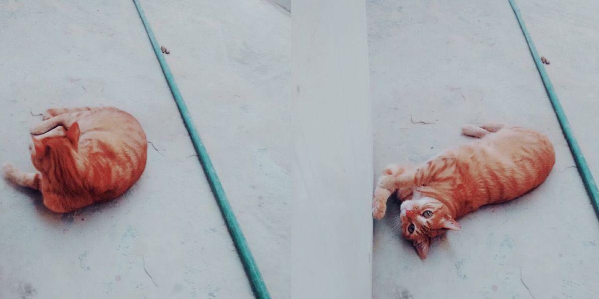 Gato Gatos Gato😽 Gatos 😍 Gata Gatas Gata ♡ GataLinda Gatas *-* Mascota Mascotas :) Mascotas