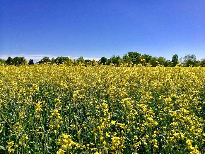 Plant Sky Field