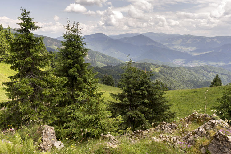 Velka Fatra Beauty In Nature Cloud - Sky Coniferous Tree Day Environment Green Color Growth Idyllic Land Landscape Mountain Mountain Range Nature No People Non-urban Scene Outdoors Pine Tree Plant Range Scenics - Nature Sky Tranquil Scene Tranquility Tree