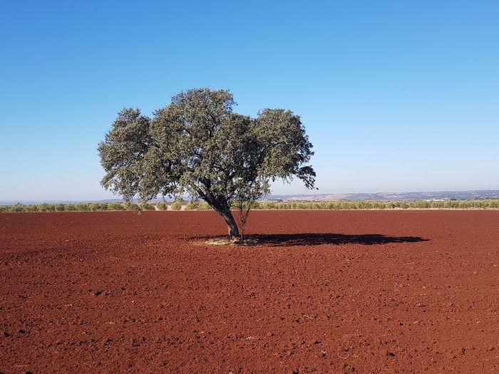 Tree on field against clear blue sky
