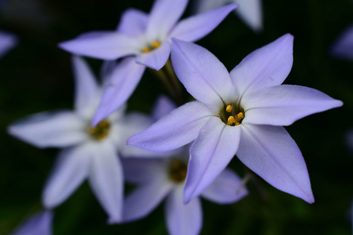 Flower Nature Beauty In Nature Close-up Plant Petal Fragility Flowers Flower Collection Flower Photography