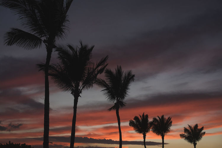 Calm Colors Composition Hawaii Relaxing Travel Beach Beauty In Nature Colorful Contrast Dusk Idyllic Nature Outdoors Palm Tree Scenics Silhouette Sky Sunset Tranquil Scene Tranquility Vacations