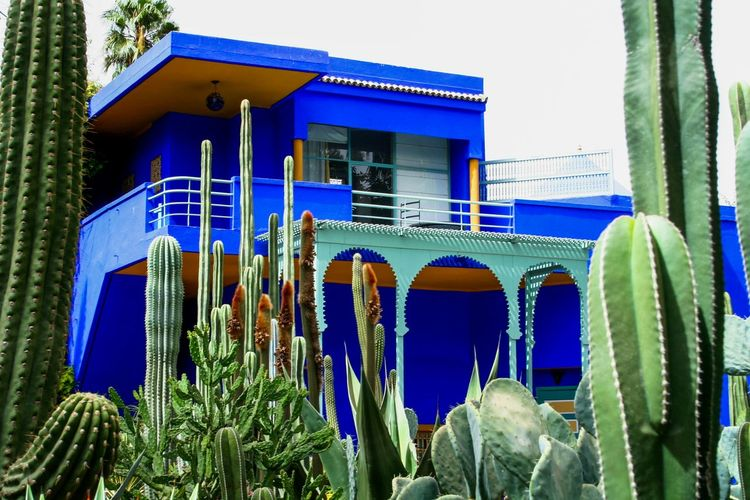 Majorelle Marrakech Maroc Marocco Bleu Majorelle Jardin Majorelle Majorelle's Garden Architecturelovers Architecture_collection Nature_collection