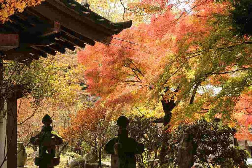 Japan Autumn Hakone Leaf Temple Temple - Building Tree