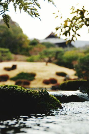 Traveling Nara,Japan 庭園