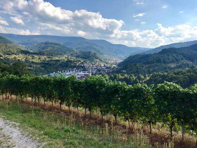 Agriculture Beauty In Nature Black Forest Germany Landscape Mountain Nature No People Outdoors Romantic Rural Scene Town Vineyard