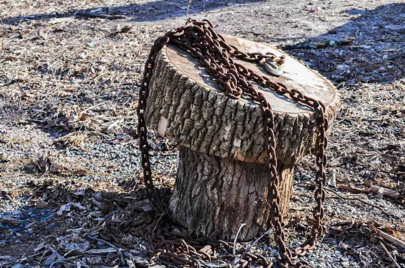 Rusted Chain on a Tree Stump Chair in the Woods Forgotten Rustic Chain Linked Nature No People Outdoors Rusted Tool Tree Stump Woods