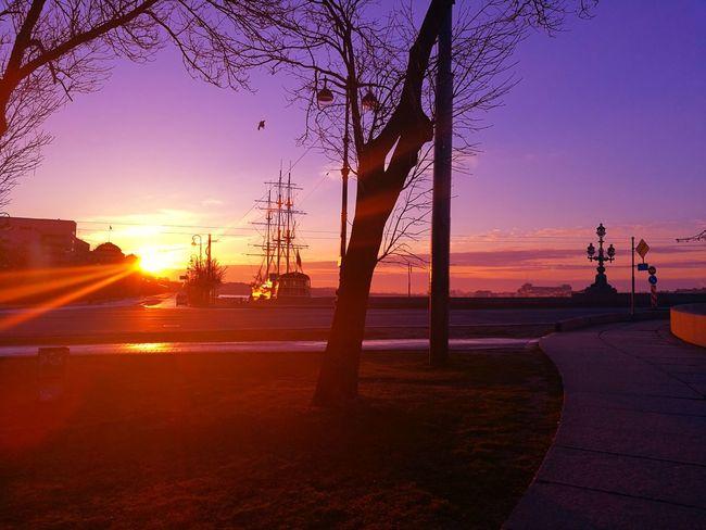 Sunset Purple Silhouette Water Outdoors Landscape No People Tree City Bridge Sky