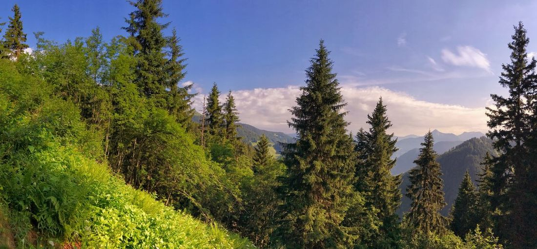 France Panorama Alps Beauty In Nature Day Forest French Alps Grass Growth Landscape Mountain Nature No People Outdoors Plant Scenics Sky Tranquility Tree