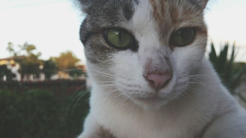 Cat😻 Lovelyplanet Everything Has Beaytiful Sides DayDream's Gallory Wintertime EyeEmWith My Cat :3 Loveyaa Cat😻
