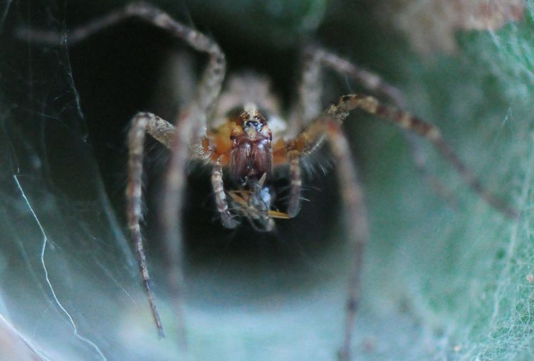 Breakfast!!!😜 Spider One Animal Animal Themes Animals In The Wild Animal Wildlife Insect Spider Web No People Day Nature Close-up Outdoors