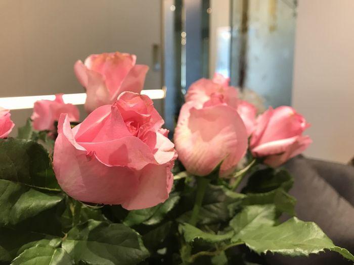 Flower Rosé