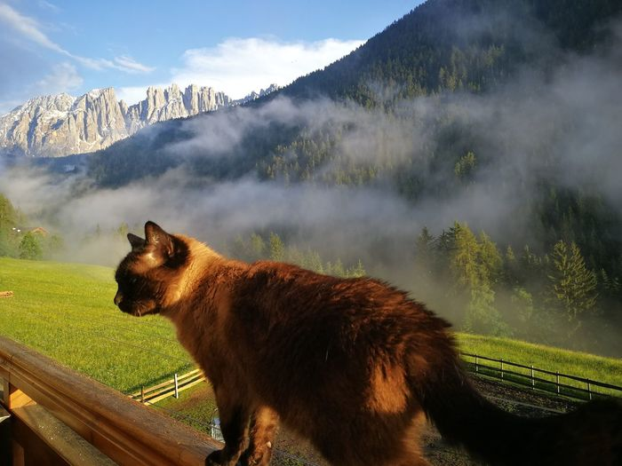 Cat on balcony with a view of the mountain Latemar Trees Cat Domestic Cat Domestic Animals Animal Themes Balcony Balcony View Latemar Nature Landscape High Angle View Cloud Village South Tyrol Trentino Alto Adige Dolomites Italy EyeEm Selects Mountain Water Snow Sky Animal Themes Mountain Range Cloud - Sky Foggy Mountain Peak Snowcapped Mountain Rocky Mountains Physical Geography
