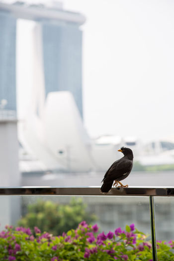Marina Bay Sands Animal Animal Themes Animal Wildlife Animals In The Wild Architecture Bird Building Building Exterior Built Structure Day Flower Flowering Plant Focus On Foreground Nature No People One Animal Outdoors Perching Selective Focus Vertebrate