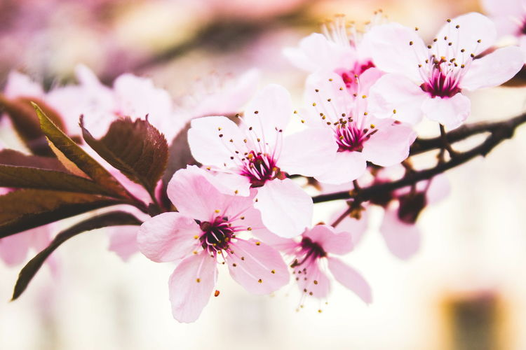 Showcase April Nature Flowers