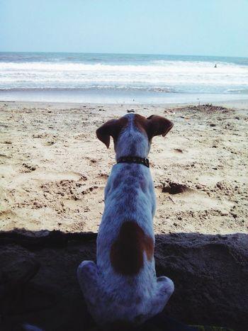 Lola y el mar Sea Enjoying The Sun Hello World Relaxing Vacation Time