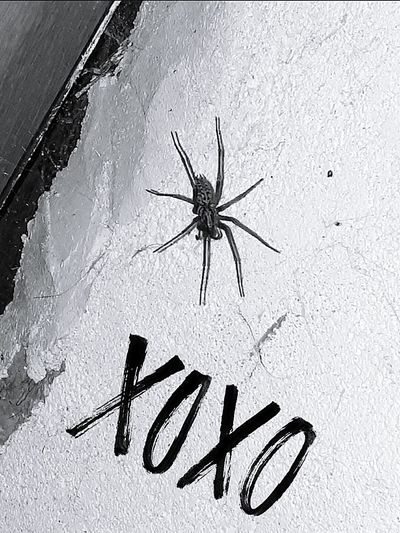 Animal Themes No People Indoors  Night Text Naturelovers Animal Photography Urban Insect Black&white Spider :)