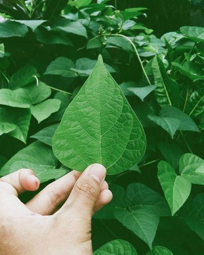 go green Cintai alam sekitar kita, untuk bumi lebih baik lagi || love the natural world around us, for the earth is better 🌲🍀🌍🌏🌎 Instagogreen Earth VSCO Vscocam Meizum2note Meizu Popugram Tagsforlikes Instalike Instagram