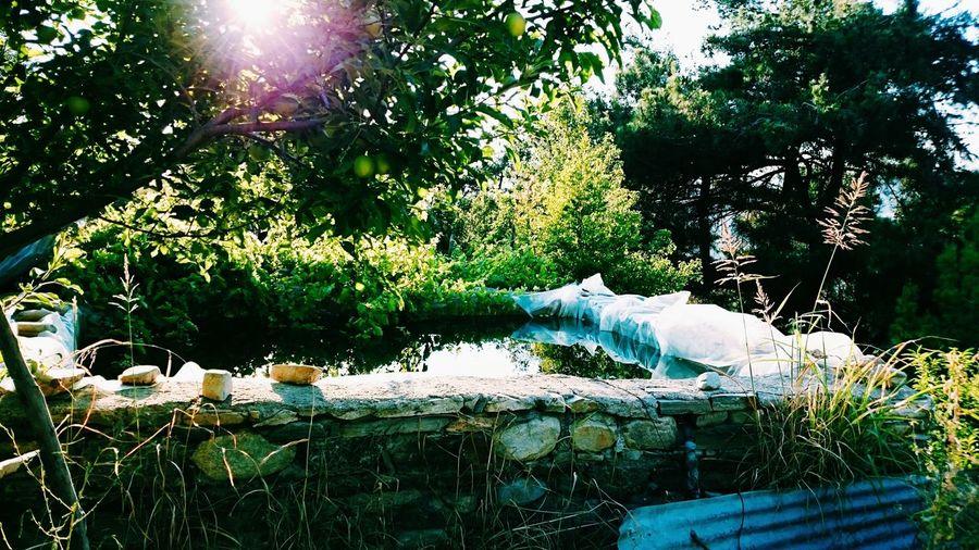 Taking Photos Relaxing Hi! Photography Pool Garden