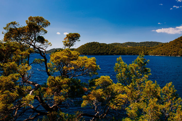 Mljet National park Beauty In Nature Croatia Day Growth Jungle Jungle Trekking Lake Landscape Mljet Mountain Nature No People Ocean View Outdoors Scenics Sea Sky TeamCanon Tranquil Scene Tranquility Tree Water