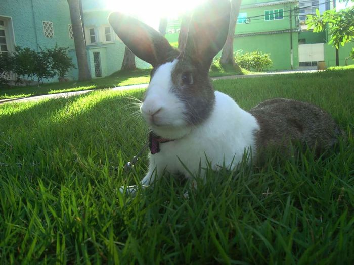 Bunny 🐰 Bunny  Pets Domestic Animals One Animal Animal Themes No People Close-up Grass Outdoors Tranquility