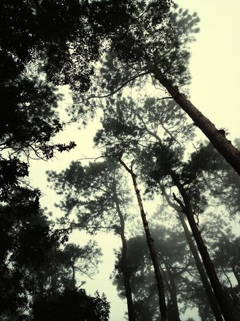 Thailand Nature Chiangmai Fog