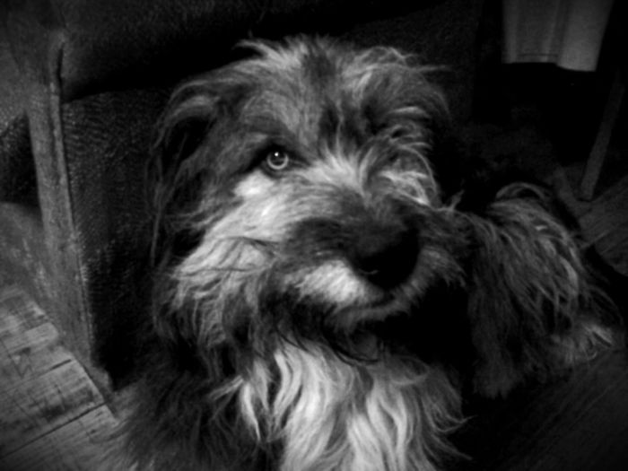 mi perro chicho Dog❤ Animal Portrait Black And White Photography Tablet Barroco Austral Chile