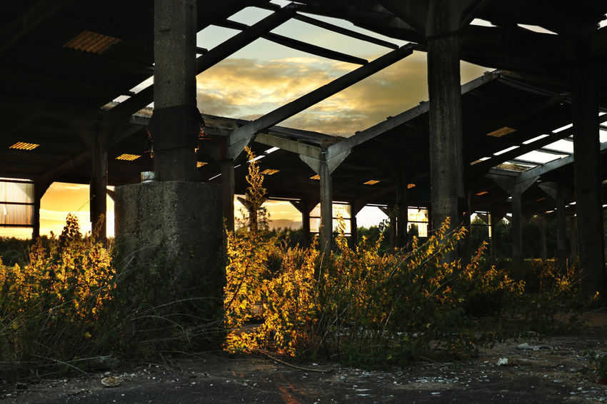 Warehouse returned to nature No People Built Structure Plant Day Sky Nature Architecture Return To Nature Overgrown Derelict Building Abandoned Places Mushroom Farm Ruins Sunset Sunlight Golden Hour EyeEm Selects Sommergefühle