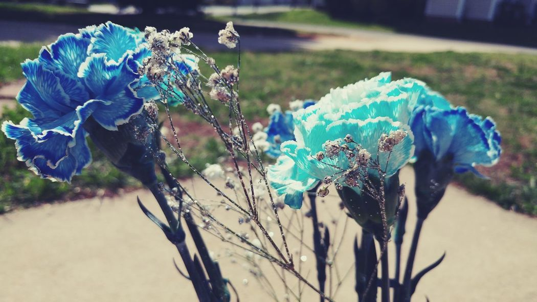 Close-up Blue Flower Fragility Beauty In Nature Plant Nature Focus On Foreground Day Outdoors Carnation Flowers Blue Carnations Baby's Breath Flowers
